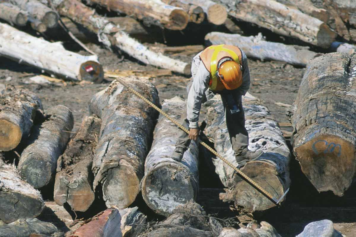 Seleción de las maderas apropiadas